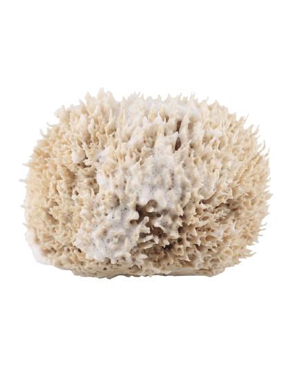 CYPCYP 混合油性肌天然海绵海藻家用搓澡成人沐浴球W2 沐浴 控油 深层清洁 吸附毛孔垃圾